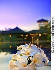 close up of frangipani flower besid