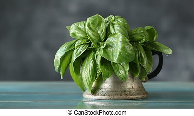 Close up of fresh basil with water drops, healthy herb on black background