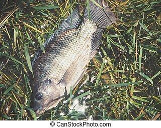 Close up of fresh fish