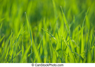 Close up of fresh grass with water drops