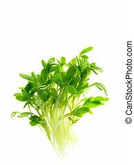 cress - Close-up of fresh green delicate cress petals...
