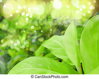 Close up of fresh green leaf in the morning at the garden.