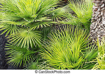 Close-up of fresh palm tree leaves
