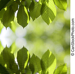 Close-up of fresh shiny cherry leaves lit by sun hanging like curtain above blurred mirror reflection on bright bokeh copy space background. Beauty and harmony of nature, fruit gardening concept.