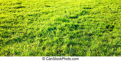 fresh spring green grass.