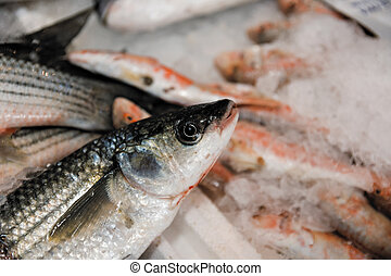 Close-Up Of Freshly Caught European Sea Bass Or...