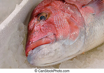 Close-Up Of Freshly Caught Red Snapper Or Lutjanus Campechanus With Sharp Teeth On Ice For Sale In The Greek Fish Market