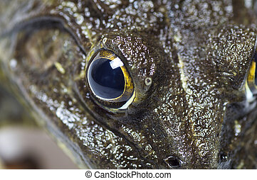 Close up of Frog on a white background