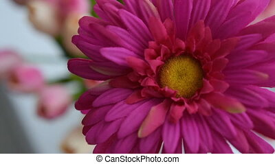 Close-up of gerbera flower on a light background