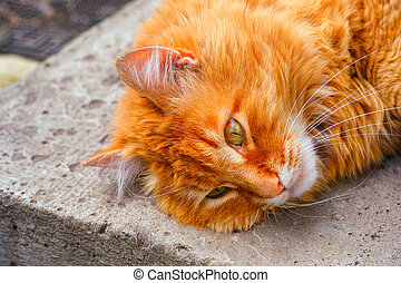 Close-up of Ginger cat lying down on doorstep oudoors.