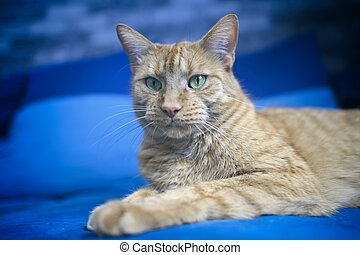 Close-up of ginger cat relaxing on a blue sofa.