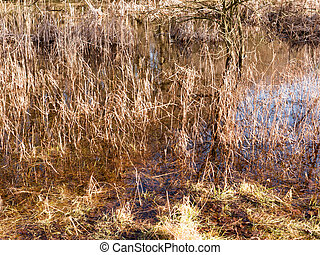 close up of golden grass reeds growing in pool of water