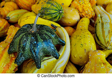 close up of gourds and squash