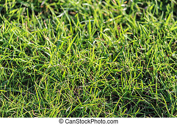 Close-up of grass in a garden