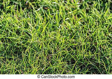 Close-up of grass in a garden