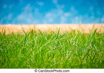 Close up of grass. Swimming pool in the background.