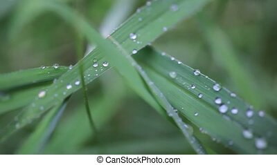 Close up of grass with rain drops macro.
