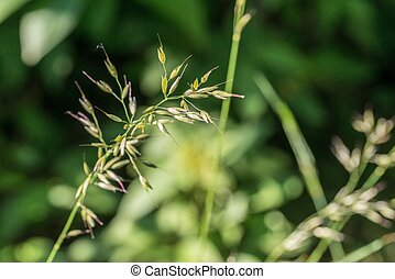 Close-up of grasses on a meadow