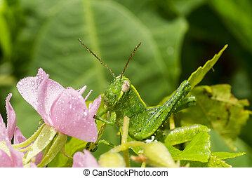 Close up of Grasshopper green