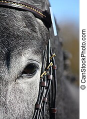 Close up of gray horse eye - Close up of dark gray horse eye