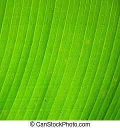 Close up of green banana leaf texture