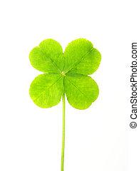 green clover leaf - Close-up of green clover leaf against ...