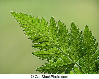 green fern leaf - Close-up of green fern leaf on green...