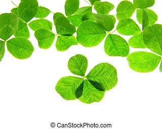Close-up of green four clover leaf against white background