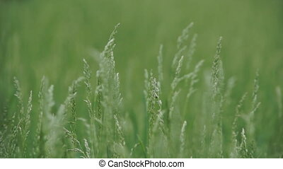 Close-up of green grass in the field