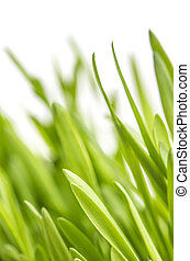 Close-up of green grass on white background. Macro