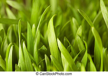 Close up of green grass - shallow depth of field