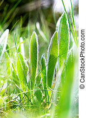 close up of green grass