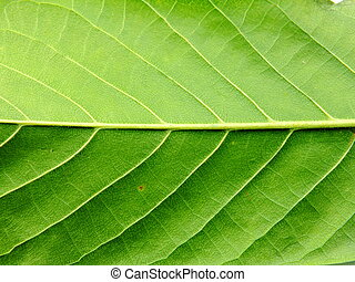 close up of green leaf background