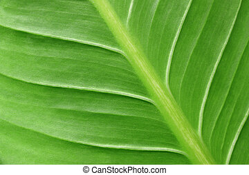 close up of green leaf for abstract or background