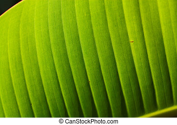 Green Leaf - Close up of Green Leaf in Sri Lanka