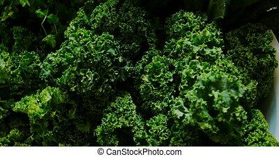 Close-up of green lettuce vegetable in supermarket 4k - ...