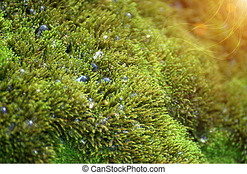close up of green moss on the rock in the waterfall.