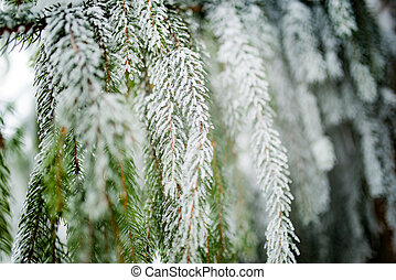 Close-up of green snow-covered frozen spruce