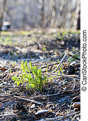 green sprout growing out of soil