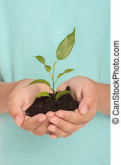 Close up of green sprout in hands