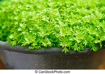 close up of green young sprouts in a pot