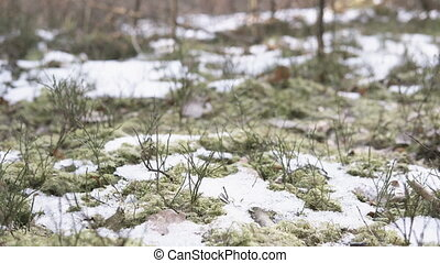 Close up of ground in a forest with small areas covered with...