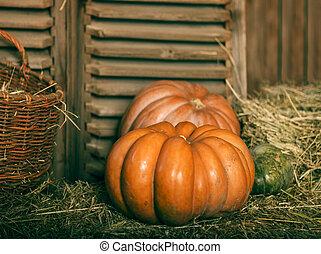 Close up of halloween pumpkins