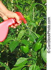 spraying pesticide - close-up of hand holding a pesticide ...