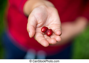 Close Up of Hand Holding Red Berries
