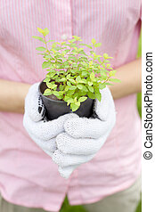 close up of hands holding plant pot