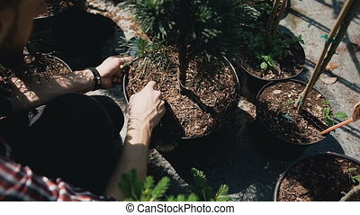 Close up of hands. People plant seedlings in black soil...
