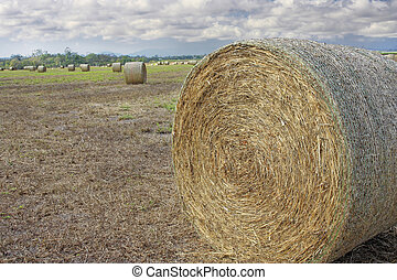 close up of hay bale in the field