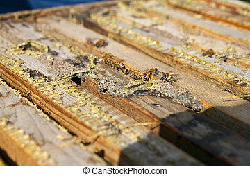 Close up of honey bees in wooden bee-keeping box
