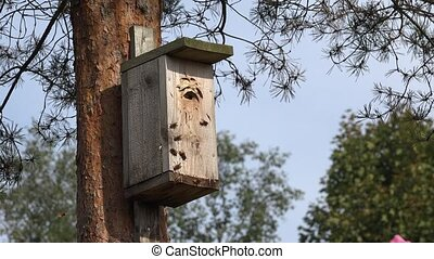 close up of hornets flying into wooden nesting box in pines....